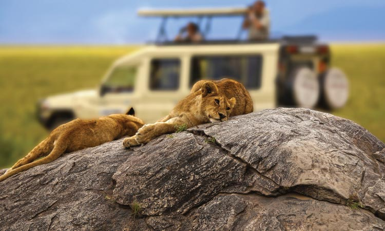 Tanzania Safaris tours and Big 5 safaris