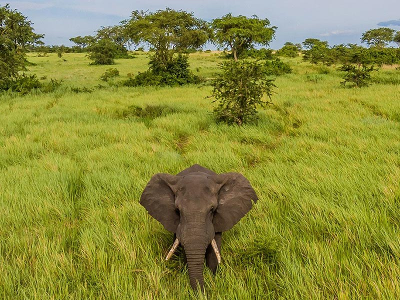 Uganda Wildlife Safari & Chimpanzee Tour