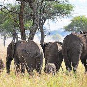 Kidepo Valley National Par Africa wildlife safari