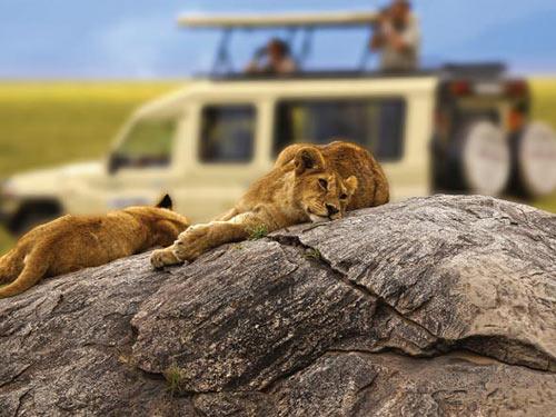 African savanna wildlife safari in serengeti